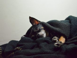 Šuo vienas