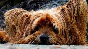Šuo stipriai šeriasi