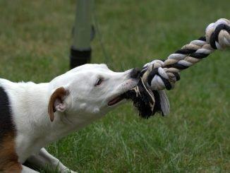 Šunų dresūra namuose