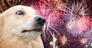 Ką daryti kai šuo bijo fejerverkų